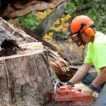 Responsibilities Of Tree Arborists In Monitoring Of The Trees