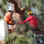 Why it is Important to Hire a Professional for Tree Removal services